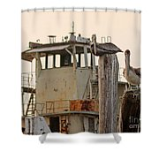 Katrina Ghost Boat And Pelicans Shower Curtain