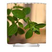 Katydid On Oregano Shower Curtain