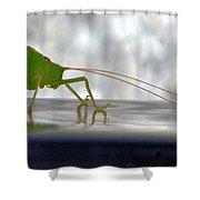 Katydid Reflection Shower Curtain