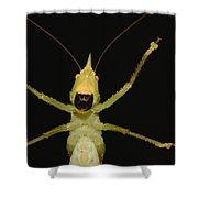 Katydid Underside Ecuador Shower Curtain