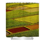 Kauai Taro Fields Shower Curtain