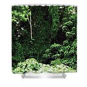 Kauai Trees Shower Curtain