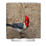 Kauaii Friend Shower Curtain