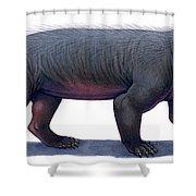 Kayentatherium, A Mammal-like Shower Curtain