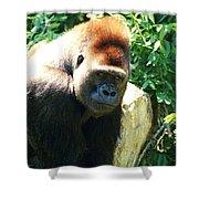 Kc Gorilla-3 Shower Curtain