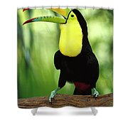Keel-billed Toucan  Shower Curtain