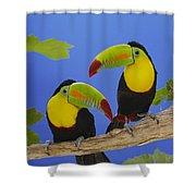 Keel-billed Toucan Pair Shower Curtain