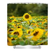 Keep Your Head Up Shower Curtain