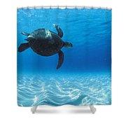 Keiki Turtle Shower Curtain