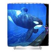 Keiko The Killer Whale Oregon Coast Aquarium Pat Hathaway Photo  1996 Shower Curtain