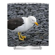 Kelp Gull Shower Curtain