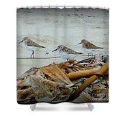 Kelp Standing Visitors Shower Curtain