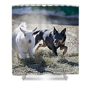 Kelpie Dog Shower Curtain