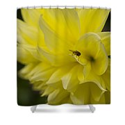 Kelvin Floodlight Dahlia Shower Curtain