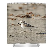 Kentish Plover Shower Curtain