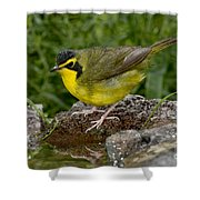 Kentucky Warbler Shower Curtain