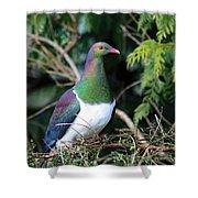 Kerehu - New Zealand Wood Pigeon Shower Curtain