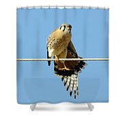 Kestrel On The Tightwire Shower Curtain
