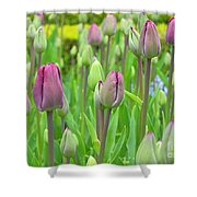 Keukenhof Gardens 12 Shower Curtain