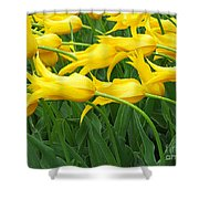 Keukenhof Gardens 13 Shower Curtain