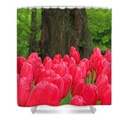 Keukenhof Gardens 19 Shower Curtain