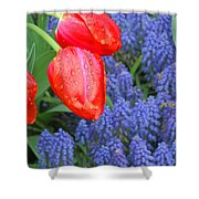 Keukenhof Gardens 4 Shower Curtain