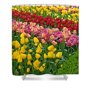 Keukenhof Gardens 72 Shower Curtain