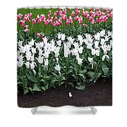 Keukenhof Gardens 8 Shower Curtain