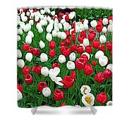 Keukenhof Gardens Panoramic 20 Shower Curtain