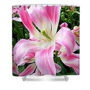 Keukenhof Pink Lily Shower Curtain