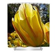 Keukenhof Yellow Tulips Shower Curtain