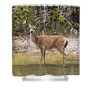 Key Deer Portrait Shower Curtain