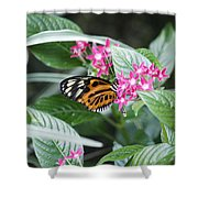 Key West Butterfly Conservatory - Monarch Danaus Plexippus 2 Shower Curtain