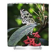 Key West Butterfly Conservatory - Idea Leuconoe Shower Curtain