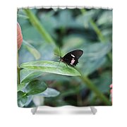 Key West Butterfly Conservatory - In Black White And Orange Shower Curtain