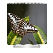 Key West Butterfly Conservatory - In Brown And White Shower Curtain