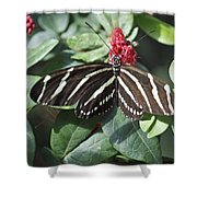 Key West Butterfly Conservatory - Zebra Heliconian Shower Curtain