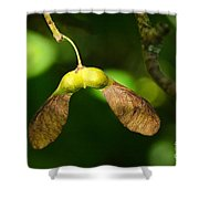 Keys Of The Forest Shower Curtain