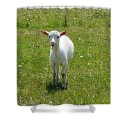 Kid Goat Shower Curtain