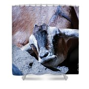 Kid Napping Shower Curtain