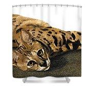 Kili Man Jaro Shower Curtain