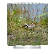 Killdeer Hatchling Shower Curtain