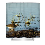 Kildeer Hunting For Worms Shower Curtain