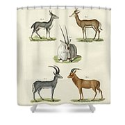 Kinds Of Antilopes Shower Curtain