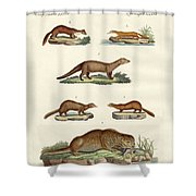 Kinds Of Otters And Marten Shower Curtain