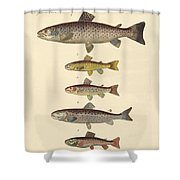 Kinds Of Trouts Shower Curtain