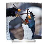 King Cormorants Shower Curtain
