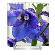 King Delphinum  Shower Curtain