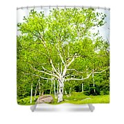 King Of The Birch Shower Curtain