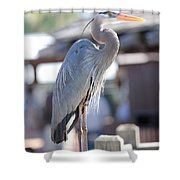 King Of The Boardwalk Shower Curtain